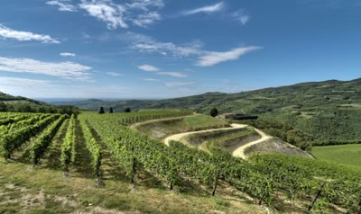 Valpolicella wijnen